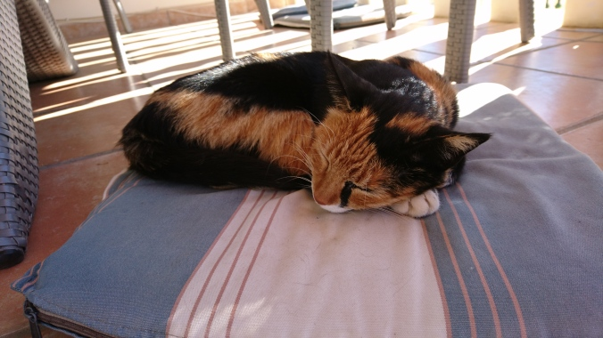 """Tigre"", a regular visitor to the villa."